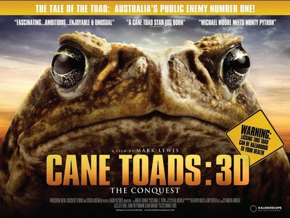 File:CaneToad2.jpg