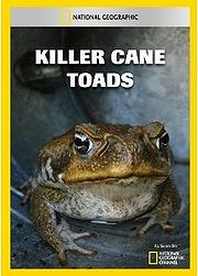 CaneToad4.jpg