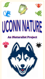 UConnNatureIcon.png