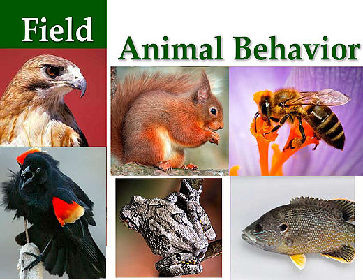 Animal Behavior Study Guide Ebook PDF 2019 - ZSOI4